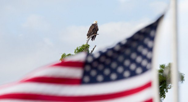 bald-eagle-flag-freedom
